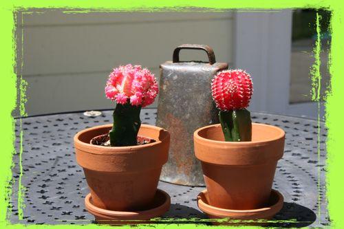 Cactus grunge