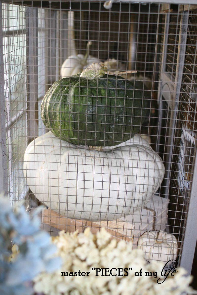 Pumpkin birdcage 6