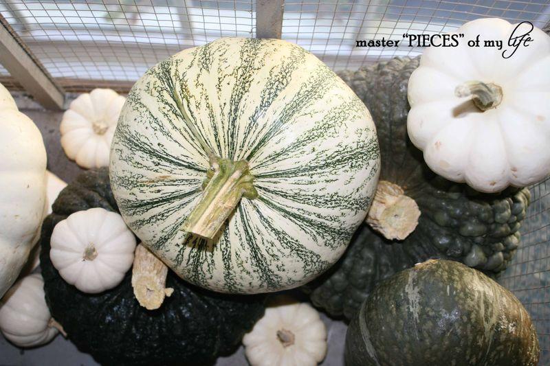 Pumpkin birdcage 11